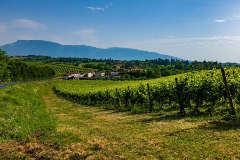 Le colline del Prosecco sono Patrimonio Unesco! Scopriamolo insieme