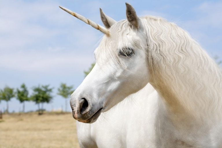L'unicorno: tutta la storia di questo animale leggendario