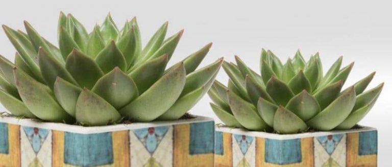 6 consigli per arredare il tuo appartamento con piante grasse